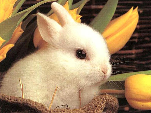cute_rabbit bunny